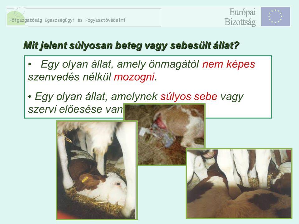 9 A vemhesség előrehaladott állapotában levő állatok, amelyeknél az ellés szállítás közben bekövetkezhet.