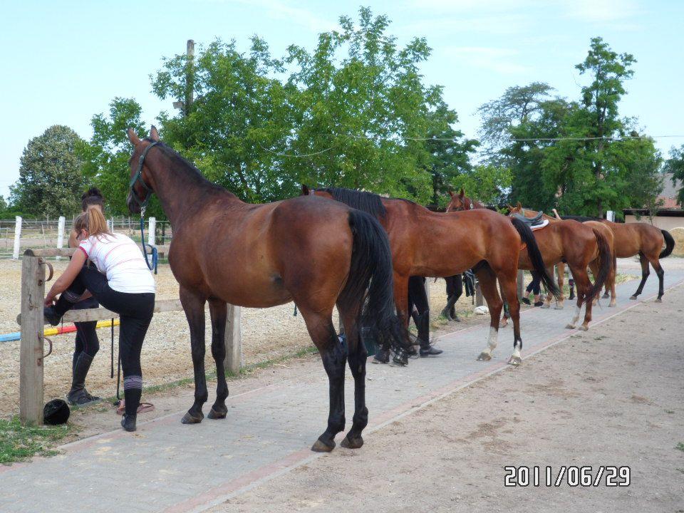A ló békés felhasználásának korszaka kb Kr.e.