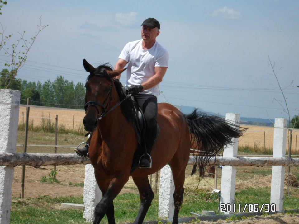 A hadászat mellett a ló az ókori mitológia, majd később szinte valamennyi művészeti ág kedvenc motívuma.