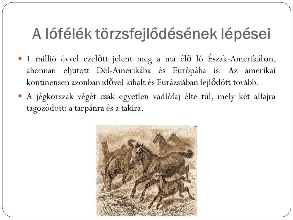 A ló háziasítása A ló háziasításának pontos idejére és helyére vonatkozóan nincs általánosan elfogadott elmélet, így lehetséges, hogy egyidej ű leg több helyen történt.