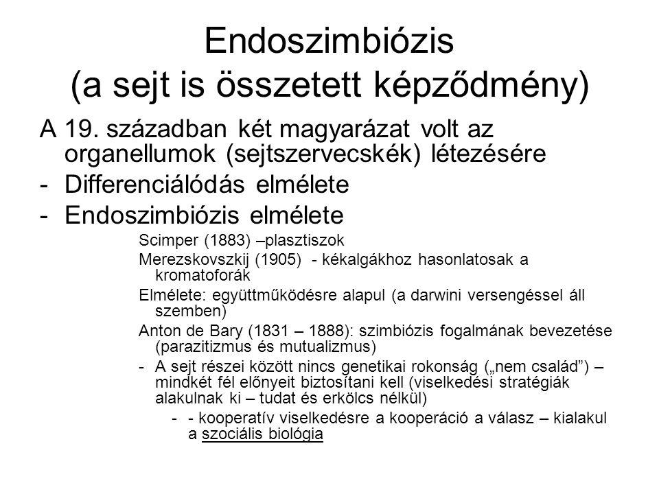 Endoszimbiózis (a sejt is összetett képződmény) A 19. században két magyarázat volt az organellumok (sejtszervecskék) létezésére -Differenciálódás elm
