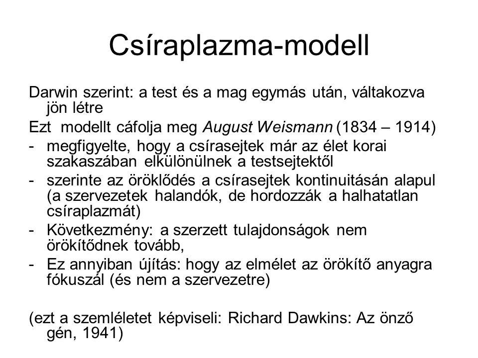 Csíraplazma-modell Darwin szerint: a test és a mag egymás után, váltakozva jön létre Ezt modellt cáfolja meg August Weismann (1834 – 1914) -megfigyelt