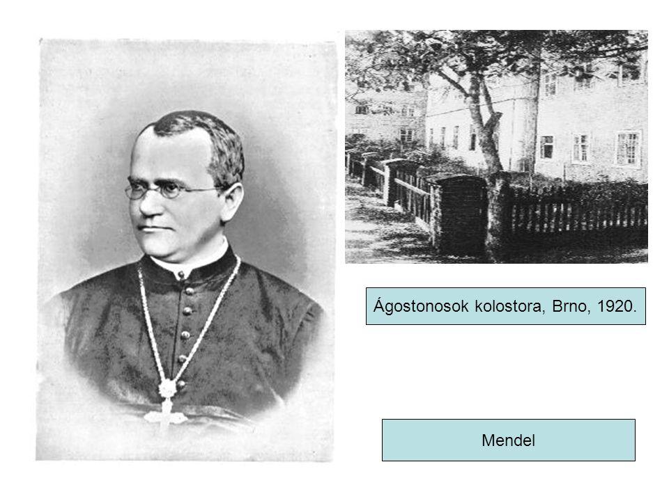 Mendel Ágostonosok kolostora, Brno, 1920.
