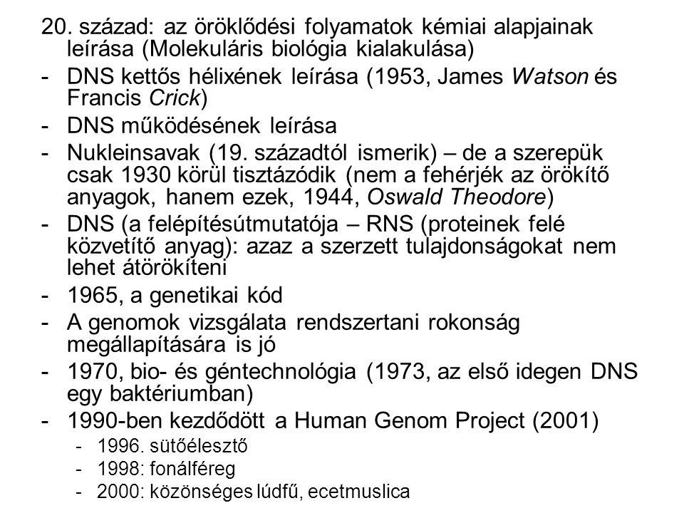 20. század: az öröklődési folyamatok kémiai alapjainak leírása (Molekuláris biológia kialakulása) -DNS kettős hélixének leírása (1953, James Watson és