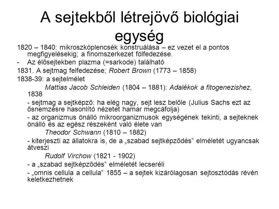 A sejtekből létrejövő biológiai egység 1820 – 1840: mikroszkóplencsék konstruálása – ez vezet el a pontos megfigyelésekig; a finomszerkezet fölfedezés
