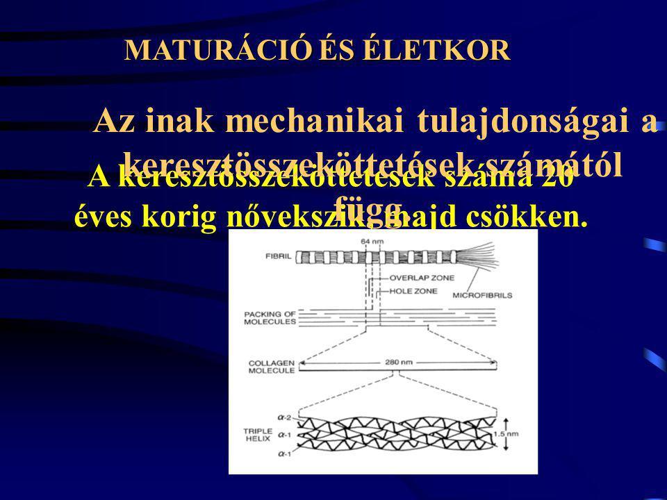 Az ín ismételt megnyújtása befolyásolja a hiszterézist Megközelítőleg a tízedik nyújtás után a hiszterézis állandóvá válik.