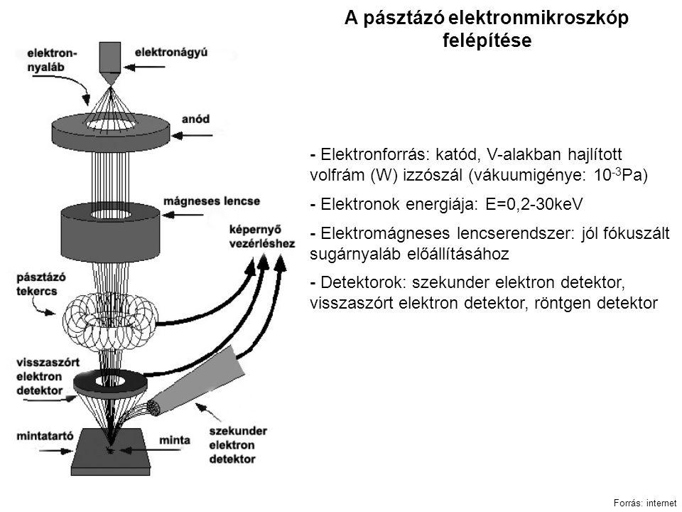 A pásztázó elektronmikroszkóp felépítése Forrás: internet - Elektronforrás: katód, V-alakban hajlított volfrám (W) izzószál (vákuumigénye: 10 -3 Pa) - Elektronok energiája: E=0,2-30keV - Elektromágneses lencserendszer: jól fókuszált sugárnyaláb előállításához - Detektorok: szekunder elektron detektor, visszaszórt elektron detektor, röntgen detektor