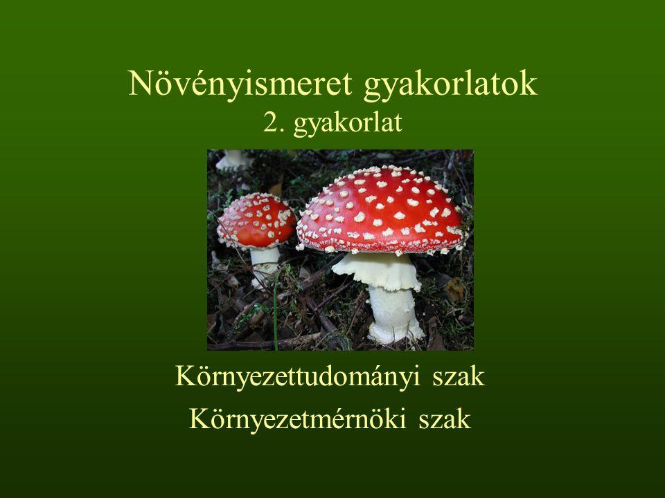 Növényismeret gyakorlatok 2. gyakorlat Környezettudományi szak Környezetmérnöki szak