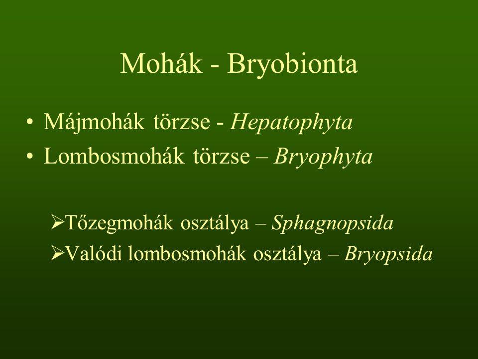 Mohák - Bryobionta Májmohák törzse - Hepatophyta Lombosmohák törzse – Bryophyta  Tőzegmohák osztálya – Sphagnopsida  Valódi lombosmohák osztálya – B