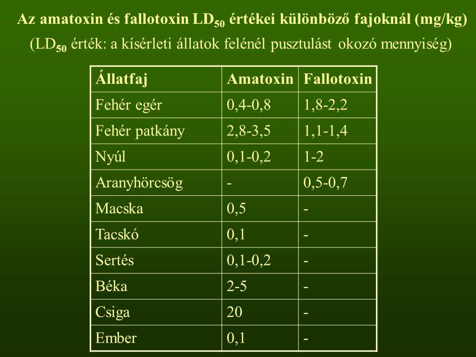 Az amatoxin és fallotoxin LD 50 értékei különböző fajoknál (mg/kg) (LD 50 érték: a kísérleti állatok felénél pusztulást okozó mennyiség) ÁllatfajAmatoxinFallotoxin Fehér egér0,4-0,81,8-2,2 Fehér patkány2,8-3,51,1-1,4 Nyúl0,1-0,21-2 Aranyhörcsög-0,5-0,7 Macska0,5- Tacskó0,1- Sertés0,1-0,2- Béka2-5- Csiga20- Ember0,1-