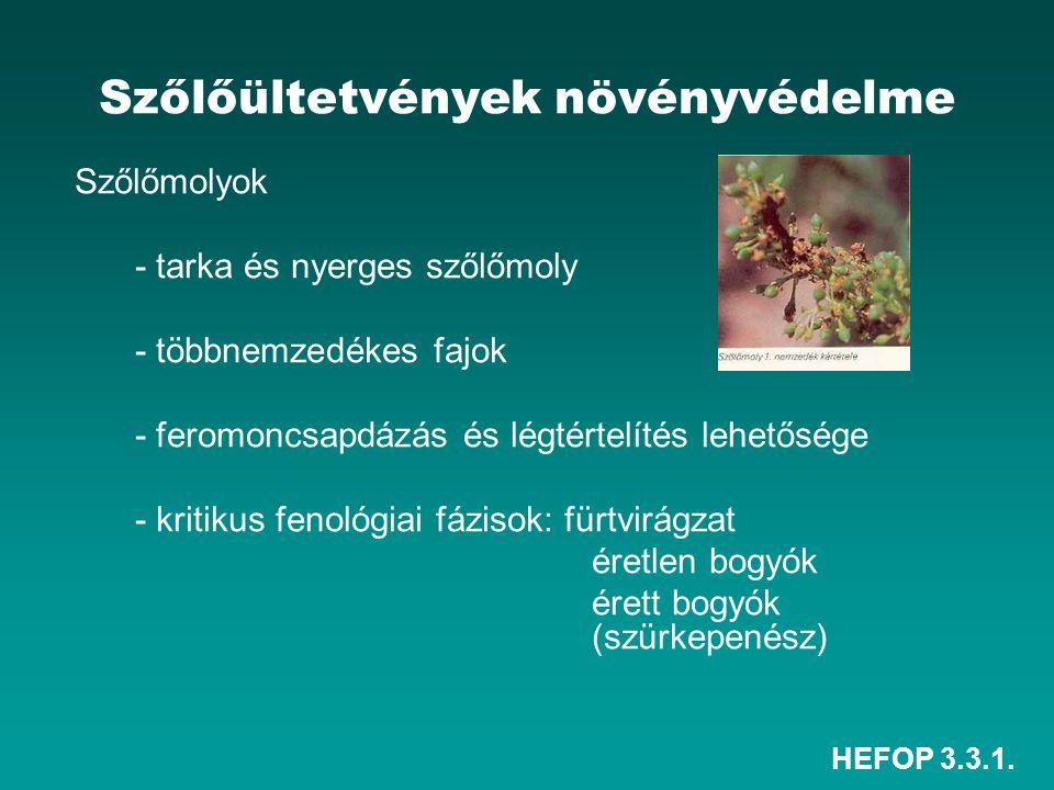 HEFOP 3.3.1. Szőlőültetvények növényvédelme Szőlőmolyok - tarka és nyerges szőlőmoly - többnemzedékes fajok - feromoncsapdázás és légtértelítés lehető