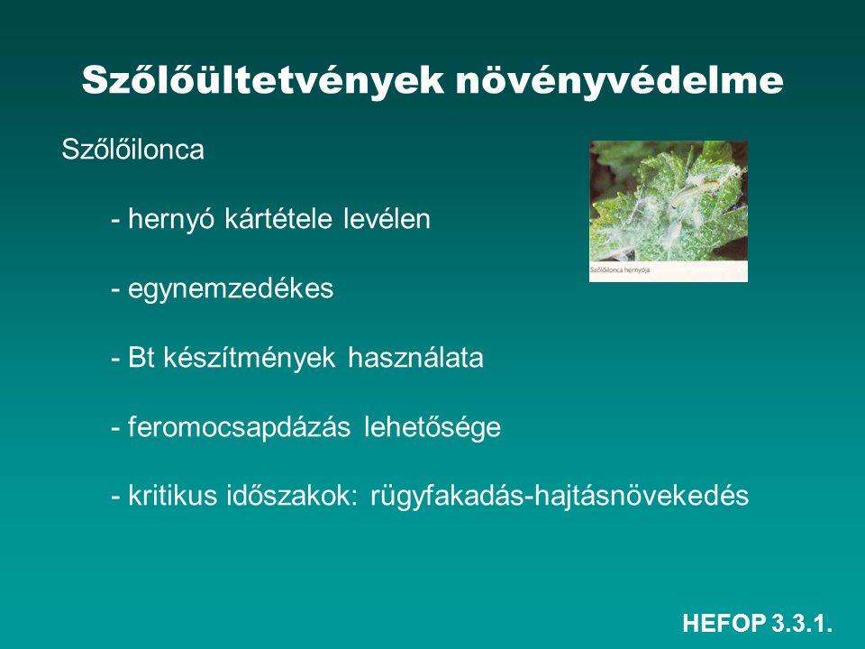 HEFOP 3.3.1. Szőlőültetvények növényvédelme Szőlőilonca - hernyó kártétele levélen - egynemzedékes - Bt készítmények használata - feromocsapdázás lehe