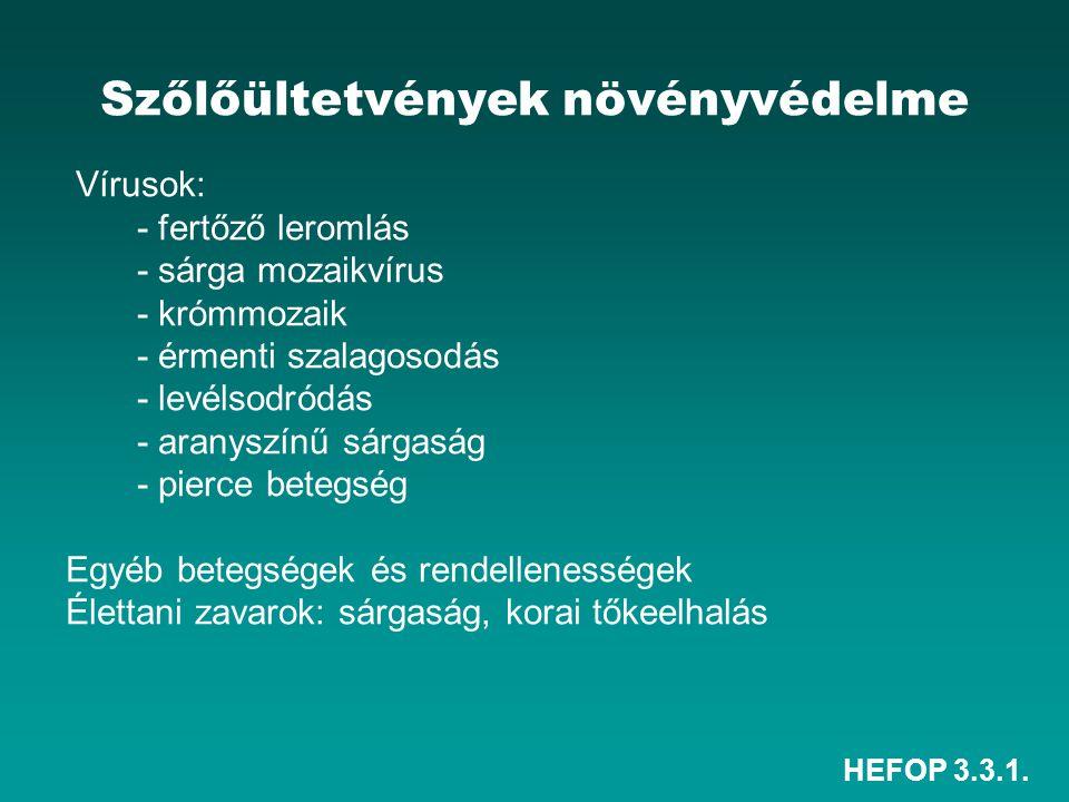 HEFOP 3.3.1. Szőlőültetvények növényvédelme Vírusok: - fertőző leromlás - sárga mozaikvírus - krómmozaik - érmenti szalagosodás - levélsodródás - aran