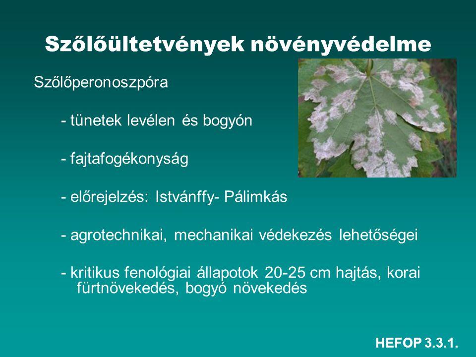 HEFOP 3.3.1. Szőlőültetvények növényvédelme Szőlőperonoszpóra - tünetek levélen és bogyón - fajtafogékonyság - előrejelzés: Istvánffy- Pálimkás - agro