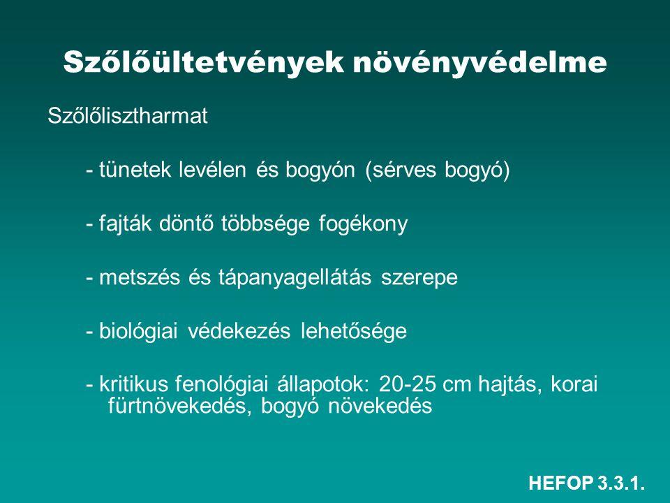 HEFOP 3.3.1. Szőlőültetvények növényvédelme Szőlőlisztharmat - tünetek levélen és bogyón (sérves bogyó) - fajták döntő többsége fogékony - metszés és
