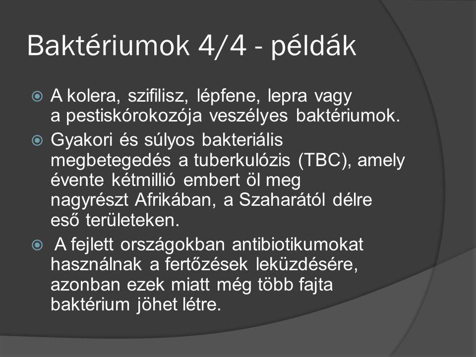 Baktériumok 4/4 - példák  A kolera, szifilisz, lépfene, lepra vagy a pestiskórokozója veszélyes baktériumok.  Gyakori és súlyos bakteriális megbeteg