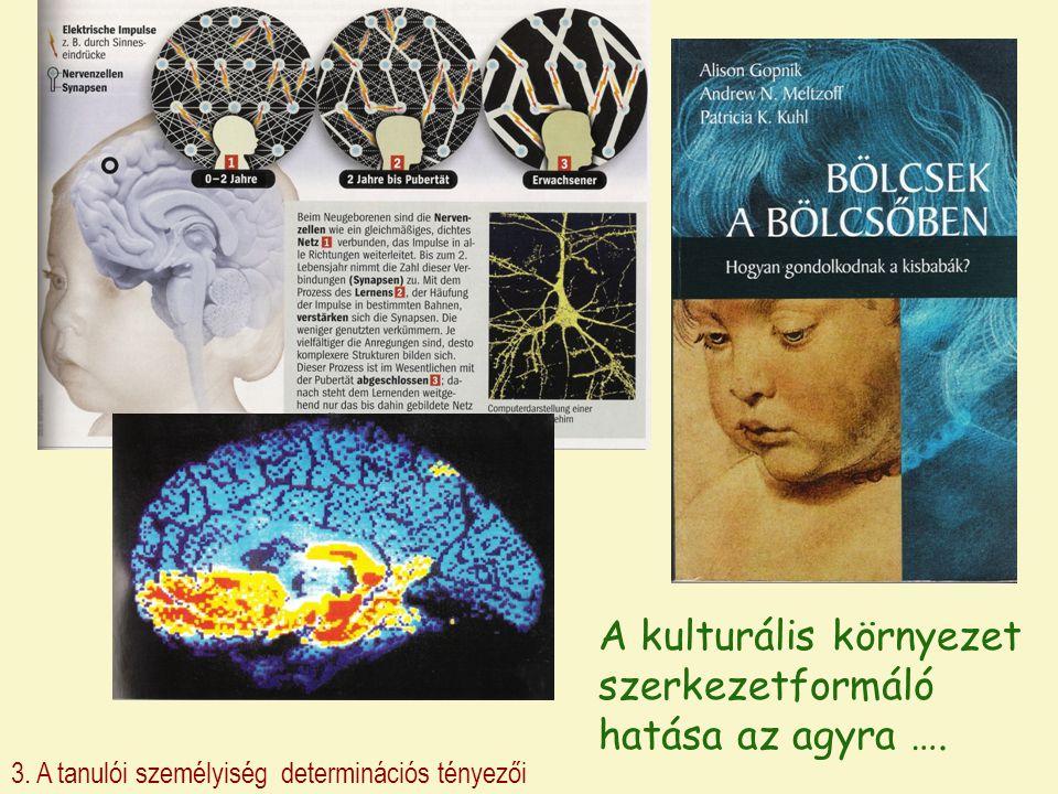 A kulturális környezet szerkezetformáló hatása az agyra ….