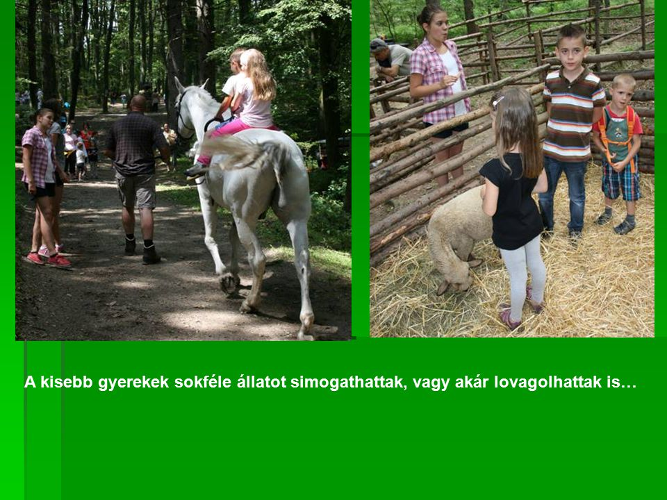 A kisebb gyerekek sokféle állatot simogathattak, vagy akár lovagolhattak is…