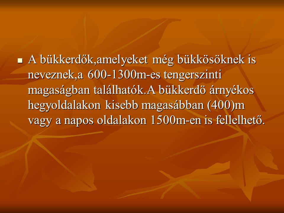 A bükkerdők,amelyeket még bükkösöknek is neveznek,a 600-1300m-es tengerszinti magaságban találhatók.A bükkerdö árnyékos hegyoldalakon kisebb magasábba