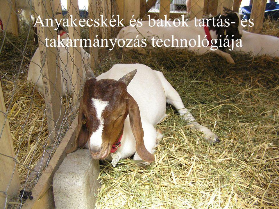 Iparszerű kecsketartás Nagyüzemi kecsketartást a kecsketermékek iránt a világpiacon végbemenő keresleten kívül a következő tényezők teszik indokolttá: gyenge termőhelyi adottságú területek gazdaságos hasznosítása; különleges, speciális és piacképes termékek (kecsketej, - hús, -sajt, -gomolya stb.) előállítása; hazai tenyészanyagbázis megteremtése a hazai termelők (üzemek, kistermelők) számára, azok termékeinek begyűjtése, nagyüzemi feldolgozása, értékesítése, szaktanácsadás, szakemberek kiképzése stb.; tenyészállatok előállítása, az előállított állati termékek értékesítése, spermabankok létrehozása, komplett termelési rendszerek exportja a fejlődő országokba.