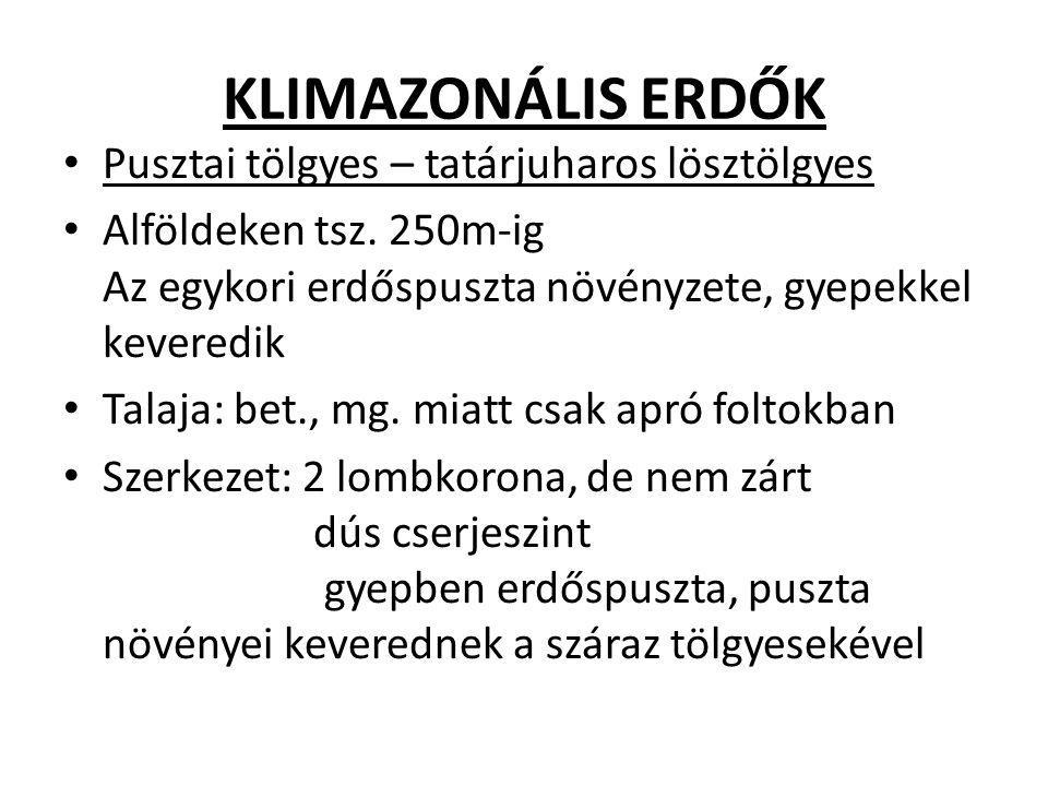 KLIMAZONÁLIS ERDŐK Pusztai tölgyes – tatárjuharos lösztölgyes Alföldeken tsz. 250m-ig Az egykori erdőspuszta növényzete, gyepekkel keveredik Talaja: b