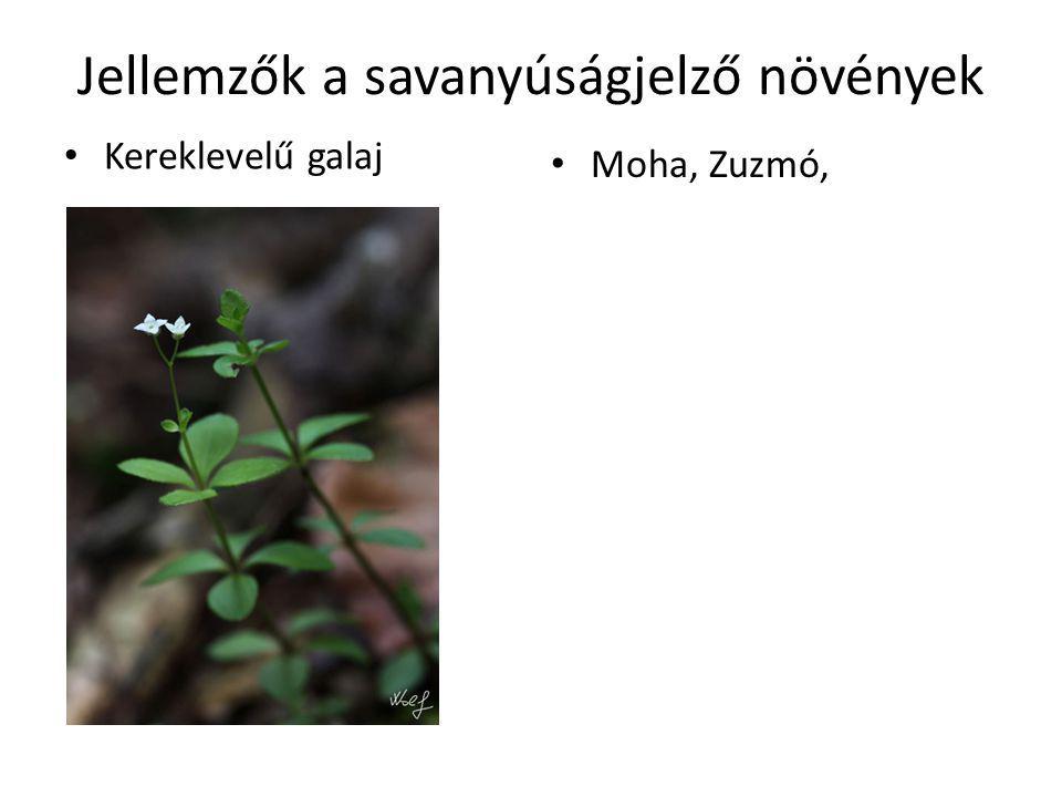 Jellemzők a savanyúságjelző növények Kereklevelű galaj Moha, Zuzmó,