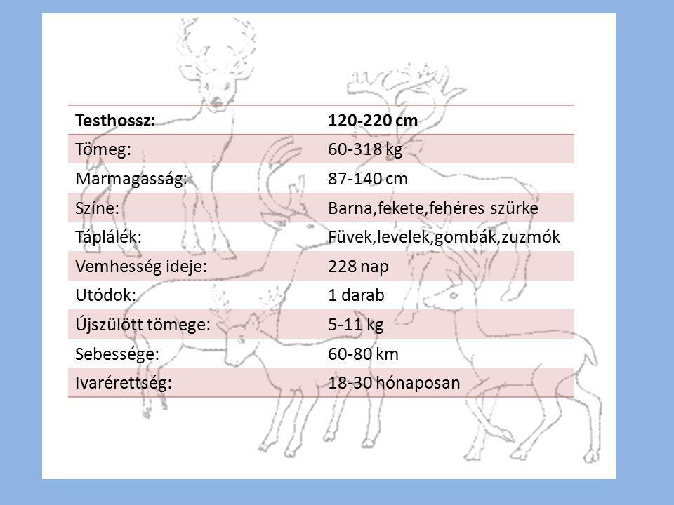 Testhossz:120-220 cm Tömeg:60-318 kg Marmagasság:87-140 cm Színe:Barna,fekete,fehéres szürke Táplálék:Füvek,levelek,gombák,zuzmók Vemhesség ideje:228 nap Utódok:1 darab Újszülött tömege:5-11 kg Sebessége:60-80 km Ivarérettség:18-30 hónaposan Adatok a rénszarvasról
