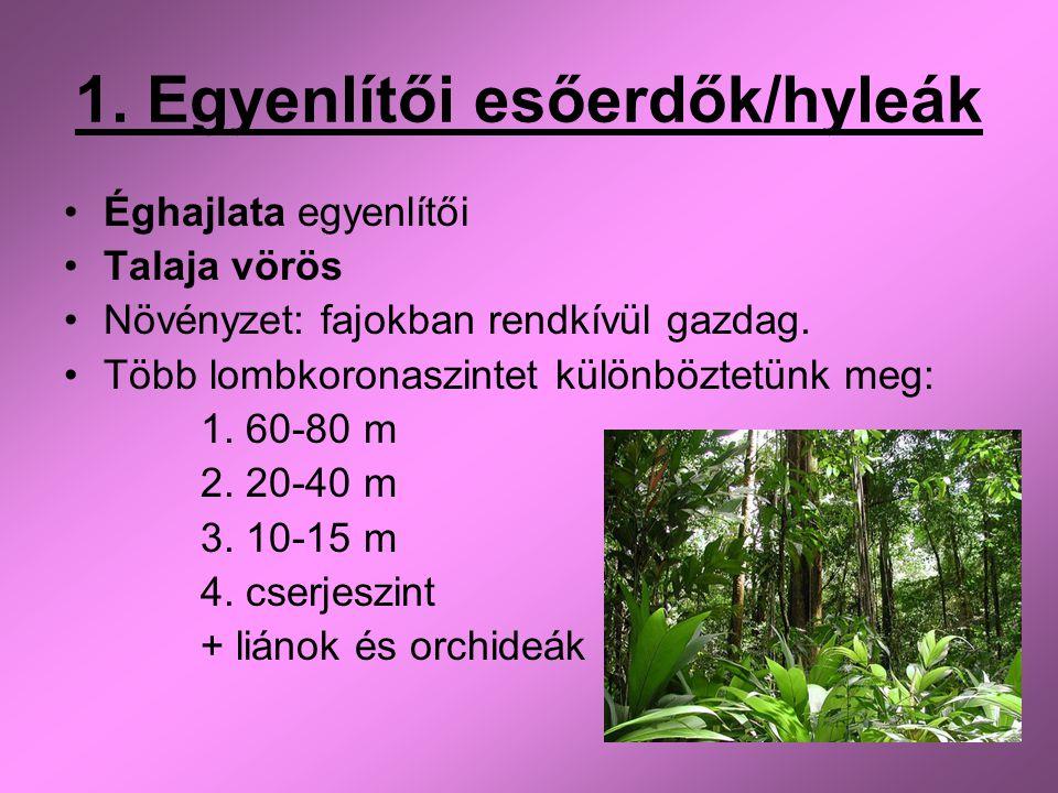 1. Egyenlítői esőerdők/hyleák Éghajlata egyenlítői Talaja vörös Növényzet: fajokban rendkívül gazdag. Több lombkoronaszintet különböztetünk meg: 1. 60
