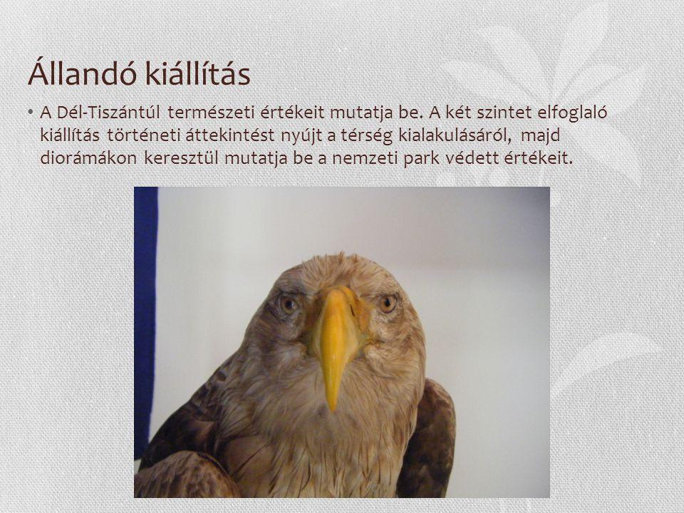 Állandó kiállítás A Dél-Tiszántúl természeti értékeit mutatja be. A két szintet elfoglaló kiállítás történeti áttekintést nyújt a térség kialakulásáró