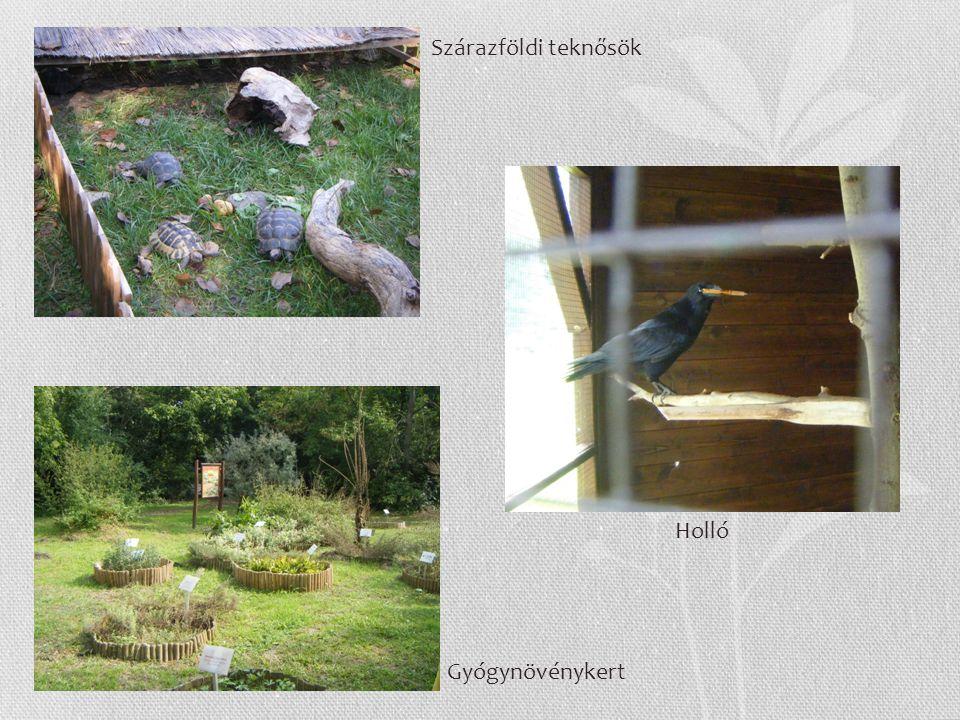 Szárazföldi teknősök Gyógynövénykert Holló