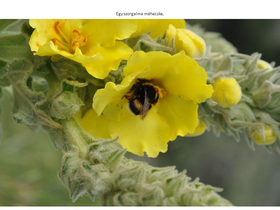 Egy szorgalma méhecske,