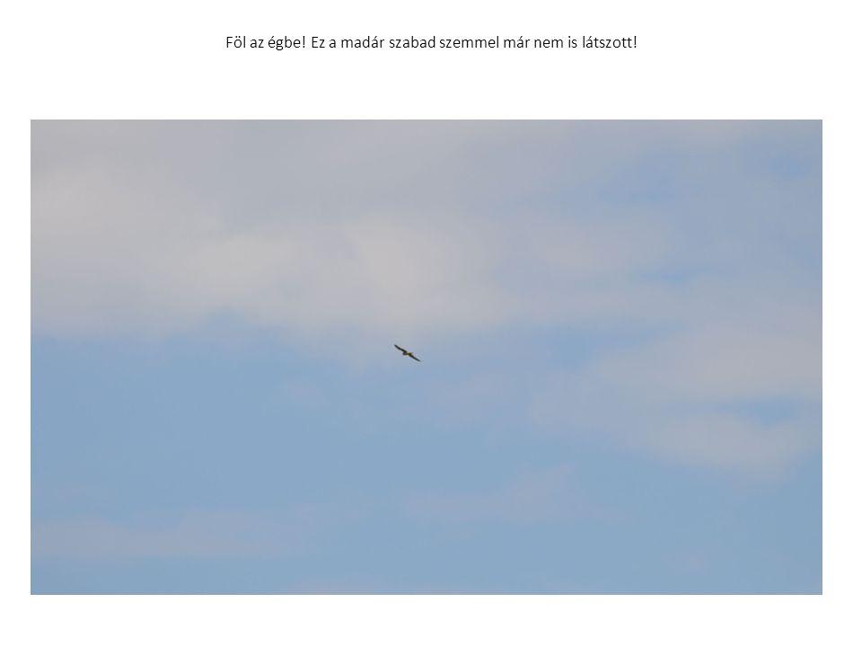 Föl az égbe! Ez a madár szabad szemmel már nem is látszott!