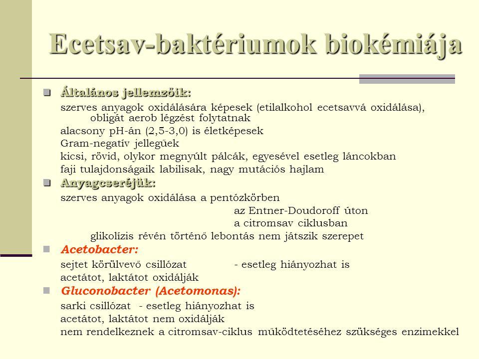 Ecetsav-baktériumok biokémiája Általános jellemzőik: Általános jellemzőik: szerves anyagok oxidálására képesek (etilalkohol ecetsavvá oxidálása), obli