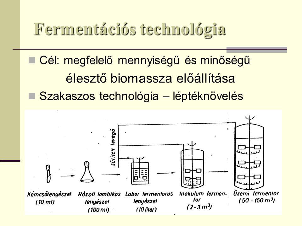 Élesztő biomassza előállítás műveleti lépései sütőélesztő aktív szárított élesztő inaktív biomassza Melasz és tápanyag előkészítés Oltóélesztő és színtenyészet készítés Oltóélesztő és színtenyészet készítés Üzemi fermentáció Üzemi fermentáció Biomassza kinyerés – Biomassza kinyerés – – feldolgozási technológia – feldolgozási technológia