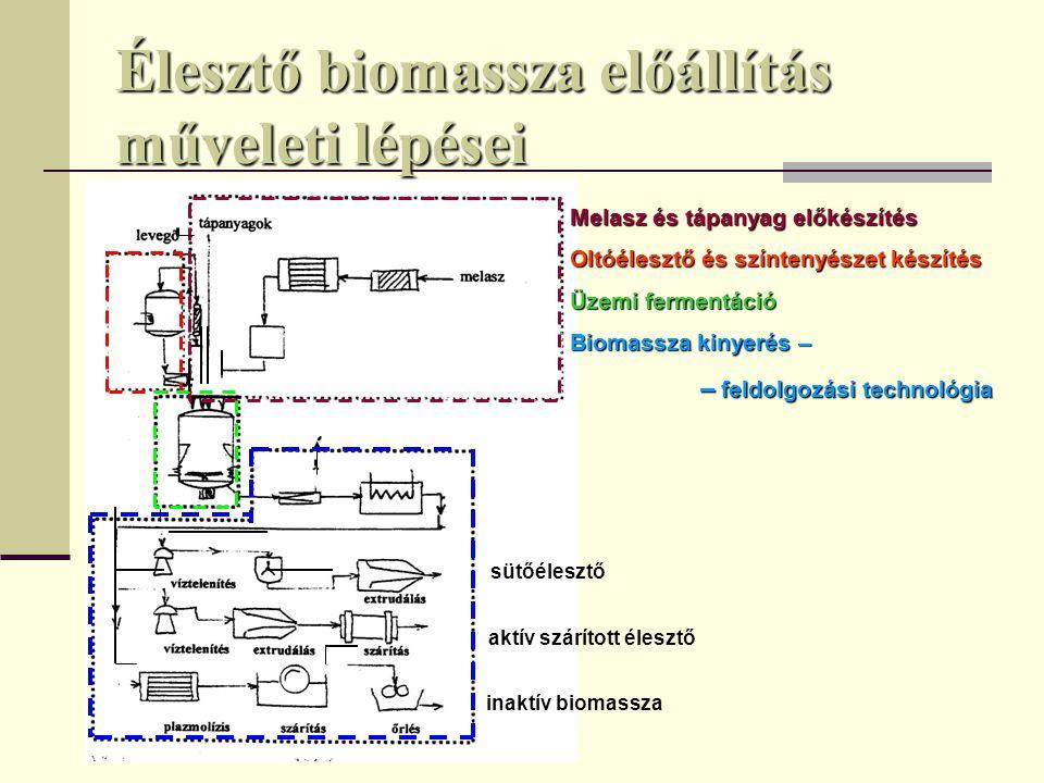 Élesztő biomassza előállítás műveleti lépései sütőélesztő aktív szárított élesztő inaktív biomassza Melasz és tápanyag előkészítés Oltóélesztő és szín