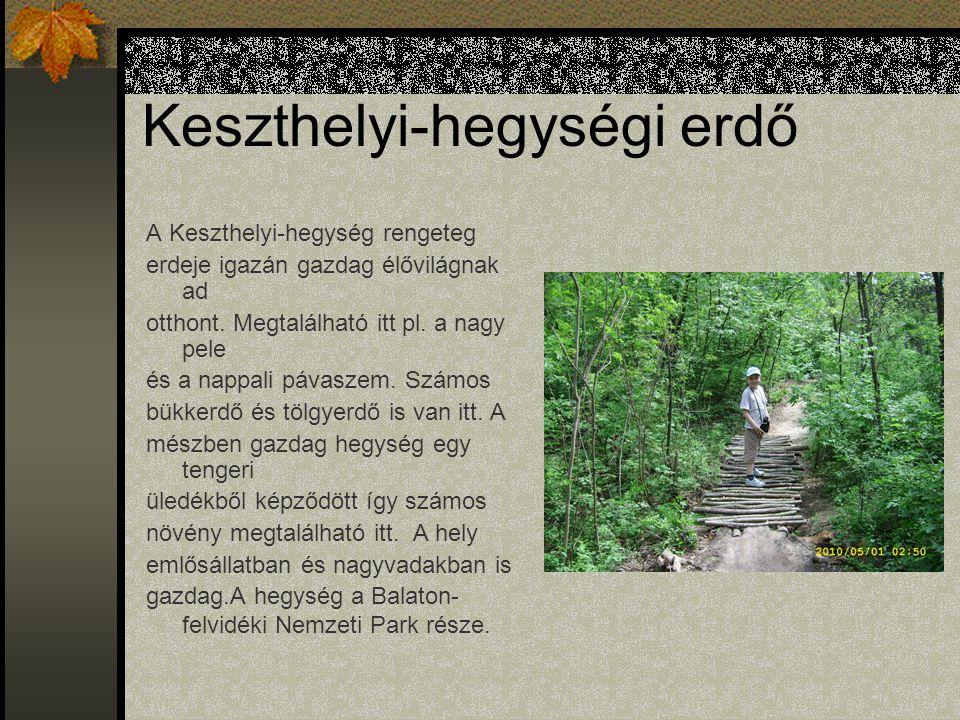 Keszthelyi-hegységi erdő A Keszthelyi-hegység rengeteg erdeje igazán gazdag élővilágnak ad otthont.