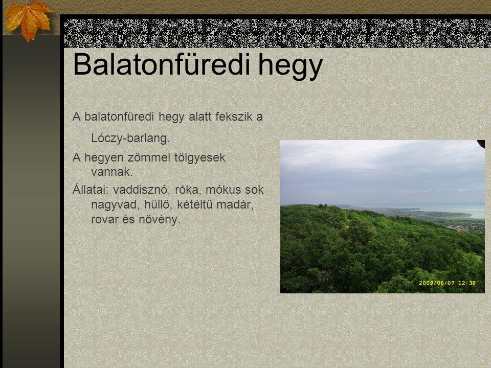 Balatonfüredi hegy A balatonfüredi hegy alatt fekszik a Lóczy-barlang.