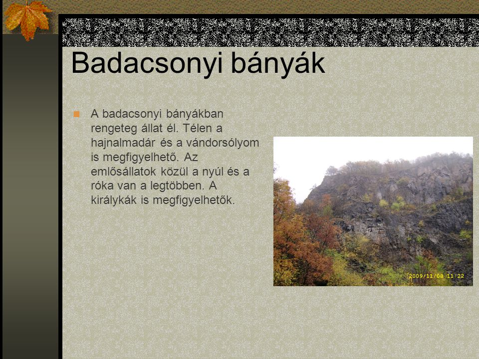 Badacsonyi bányák A badacsonyi bányákban rengeteg állat él.