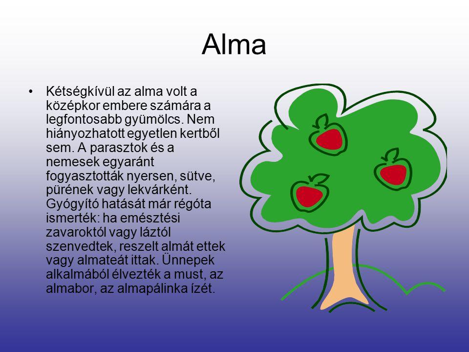 Alma Kétségkívül az alma volt a középkor embere számára a legfontosabb gyümölcs.