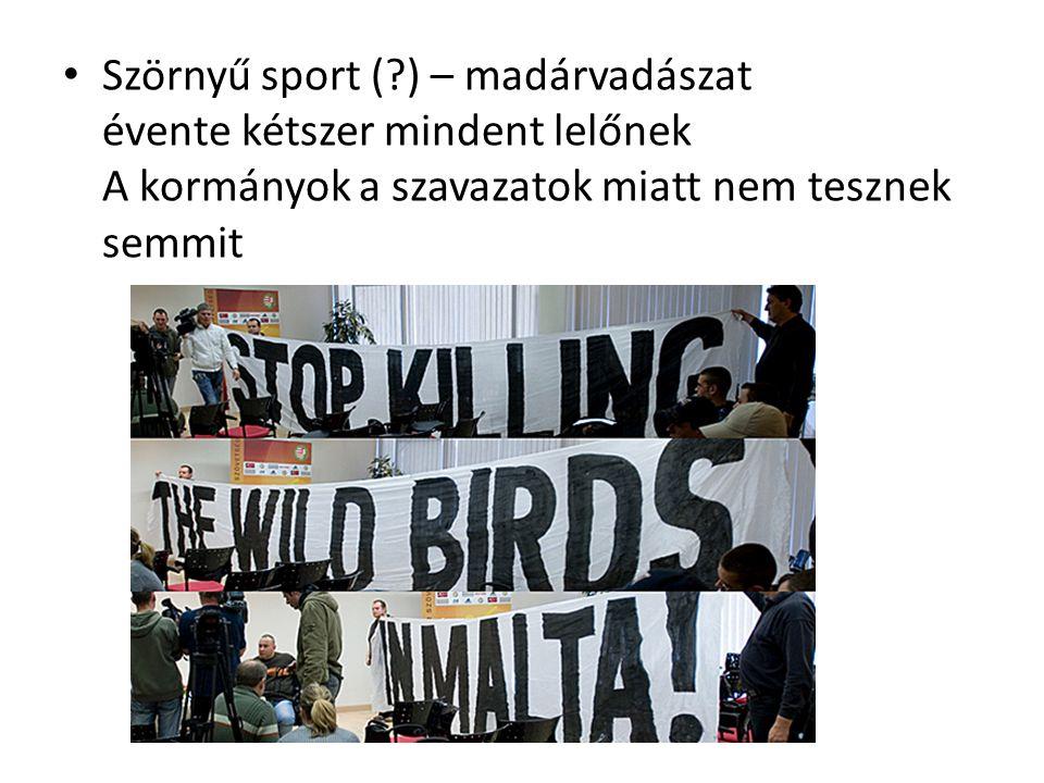 Szörnyű sport (?) – madárvadászat évente kétszer mindent lelőnek A kormányok a szavazatok miatt nem tesznek semmit