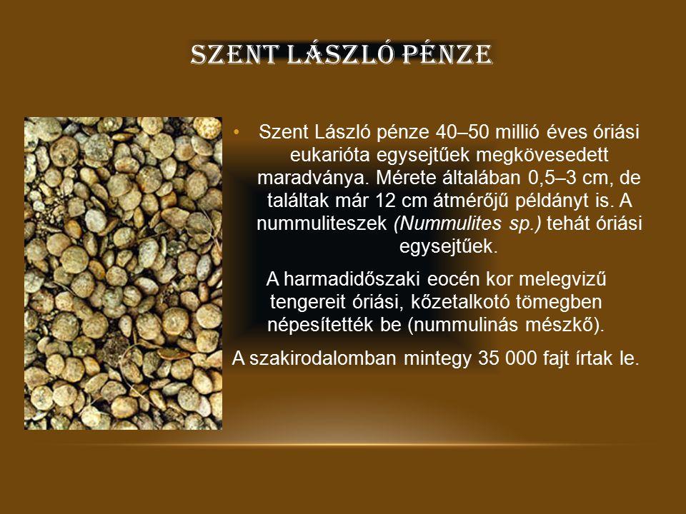 SZENT LÁSZLÓ VÉD Ő SZENT Szent László a magyar katonák védőszentje.