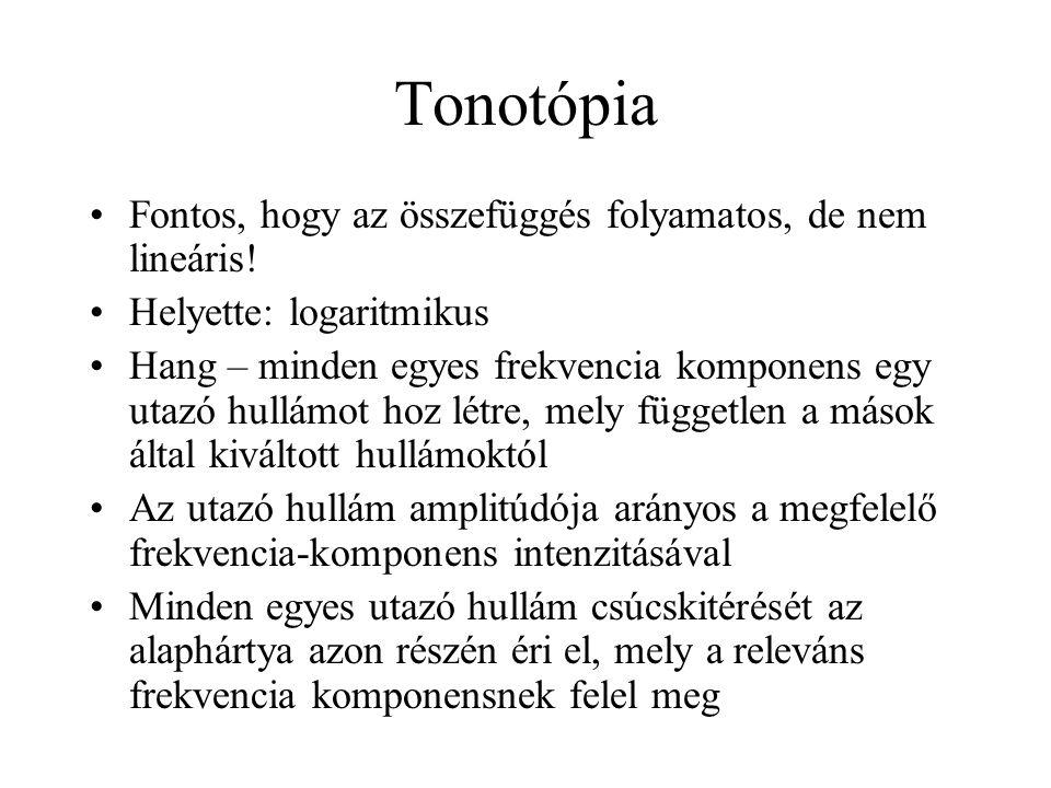 Tonotópia Fontos, hogy az összefüggés folyamatos, de nem lineáris.