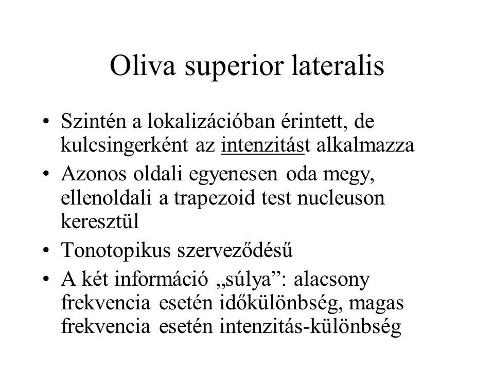 """Oliva superior lateralis Szintén a lokalizációban érintett, de kulcsingerként az intenzitást alkalmazza Azonos oldali egyenesen oda megy, ellenoldali a trapezoid test nucleuson keresztül Tonotopikus szerveződésű A két információ """"súlya : alacsony frekvencia esetén időkülönbség, magas frekvencia esetén intenzitás-különbség"""