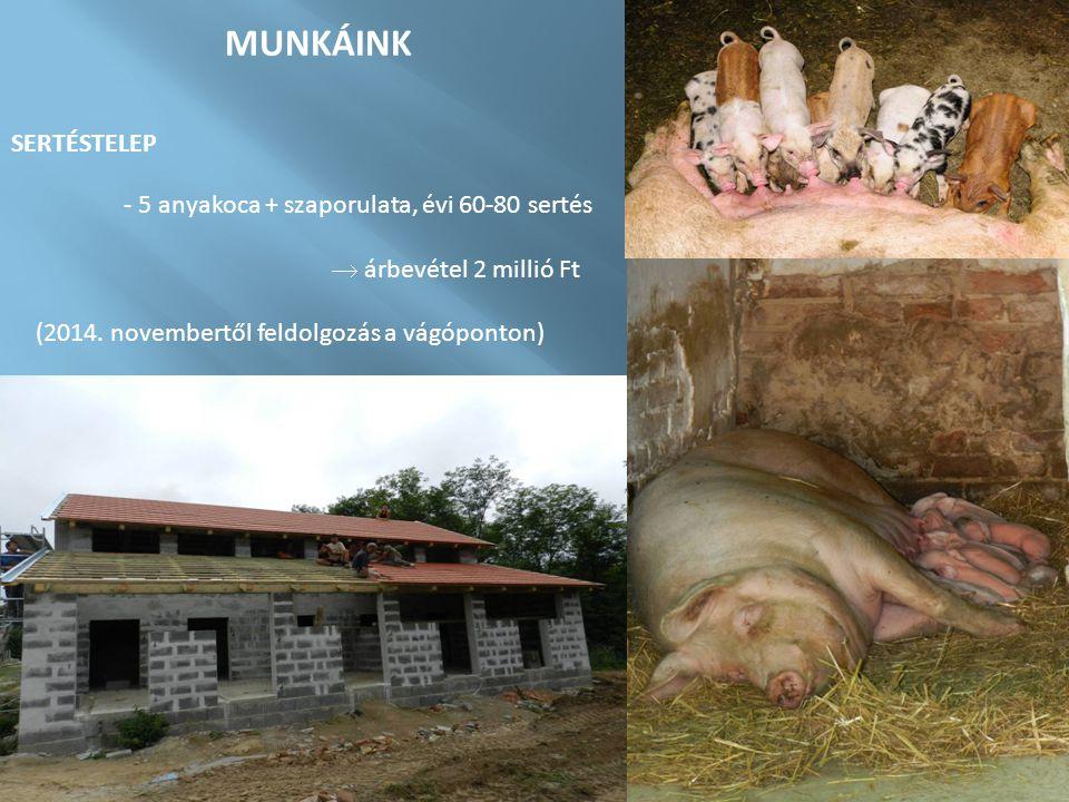 MUNKÁINK SERTÉSTELEP - 5 anyakoca + szaporulata, évi 60-80 sertés  árbevétel 2 millió Ft (2014. novembertől feldolgozás a vágóponton)