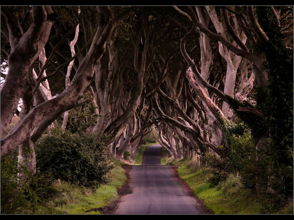 1. Úti eset (Dark Hedges, Irsko)
