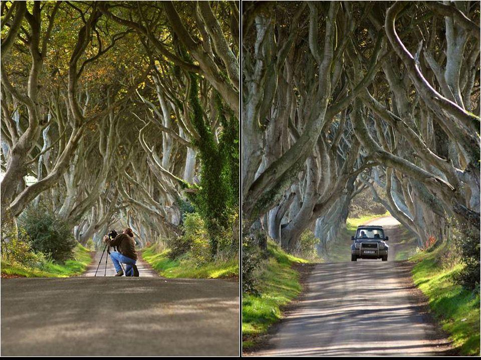 Érdekes útszakasz Írországban ( Bregagh Armoy - Antrim ).