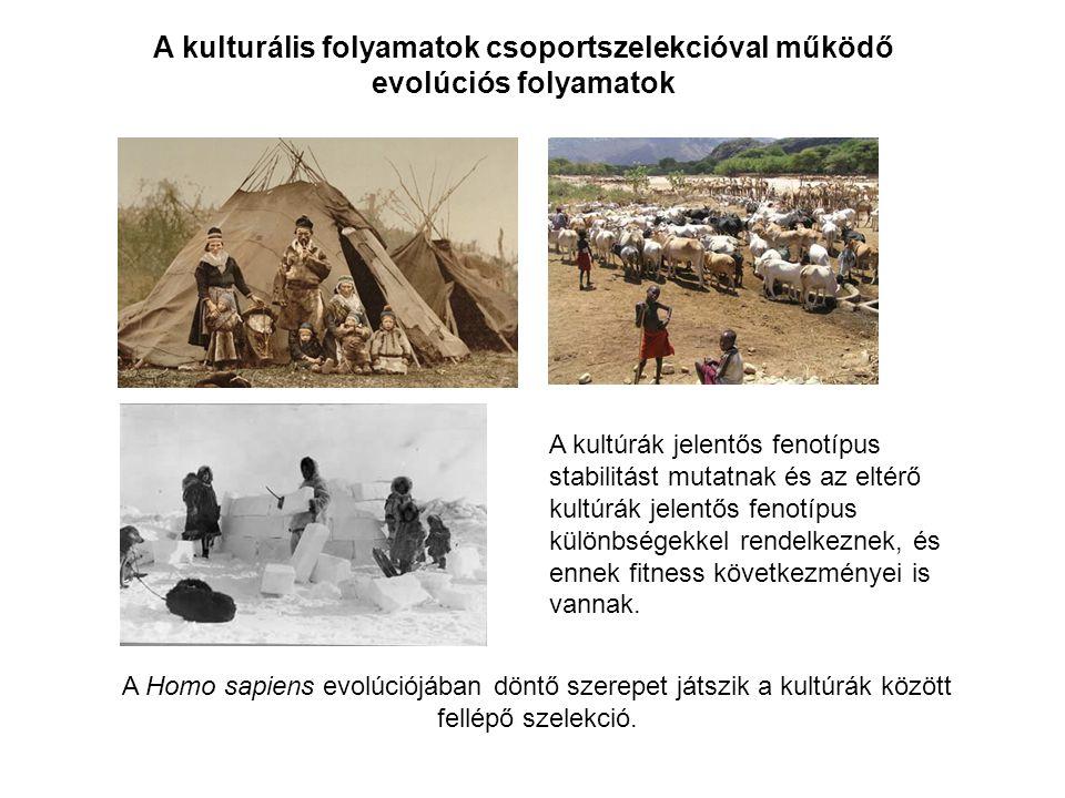 A kultúrák jelentős fenotípus stabilitást mutatnak és az eltérő kultúrák jelentős fenotípus különbségekkel rendelkeznek, és ennek fitness következmény