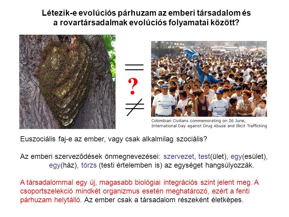 ? Létezik-e evolúciós párhuzam az emberi társadalom és a rovartársadalmak evolúciós folyamatai között? Euszociális faj-e az ember, vagy csak alkalmila