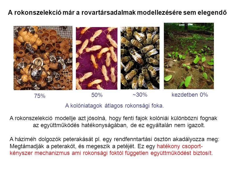 A rokonszelekció már a rovartársadalmak modellezésére sem elegendő A kolóniatagok átlagos rokonsági foka. 75% ~30% kezdetben 0% A rokonszelekció model
