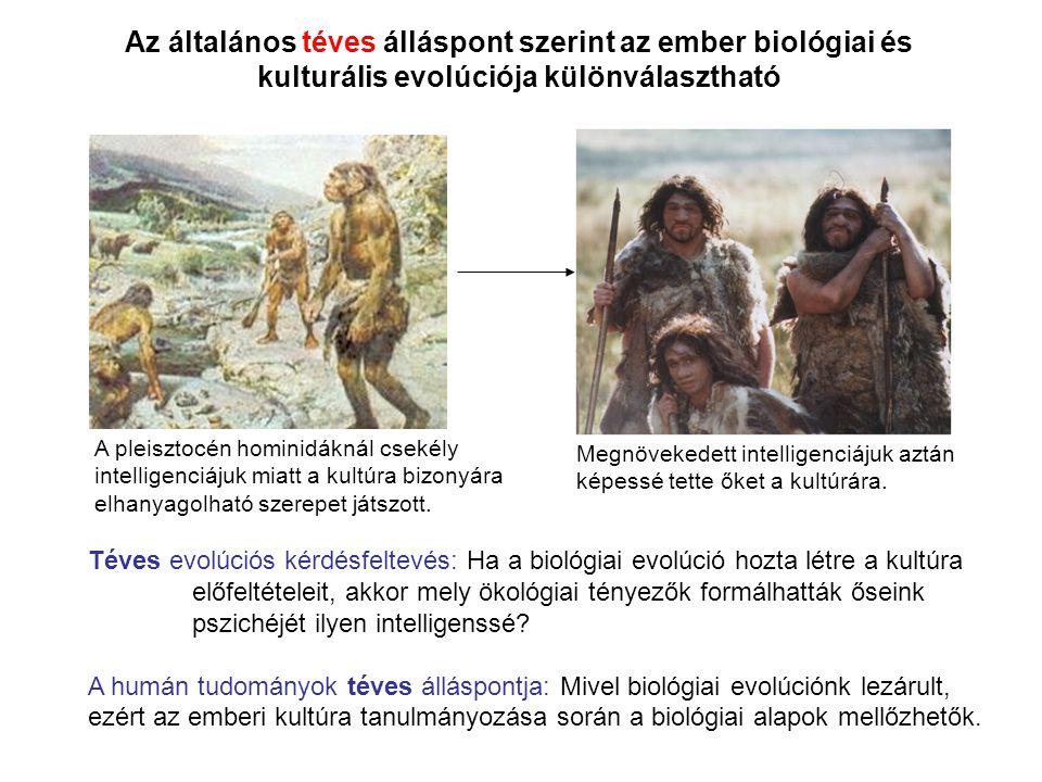 Az általános téves álláspont szerint az ember biológiai és kulturális evolúciója különválasztható A pleisztocén hominidáknál csekély intelligenciájuk
